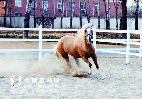 北京动物检验检疫局