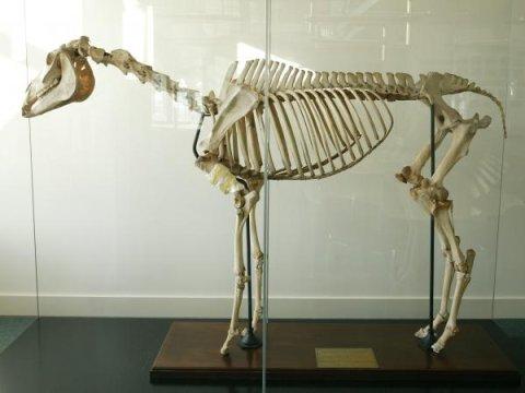 """""""日蚀""""的骨架标本"""