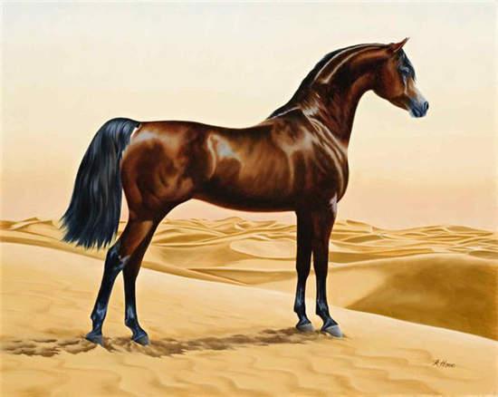 對現代大部分優秀騎乘馬和賽馬品種的形成起到關鍵作用的阿拉伯馬,其圖片