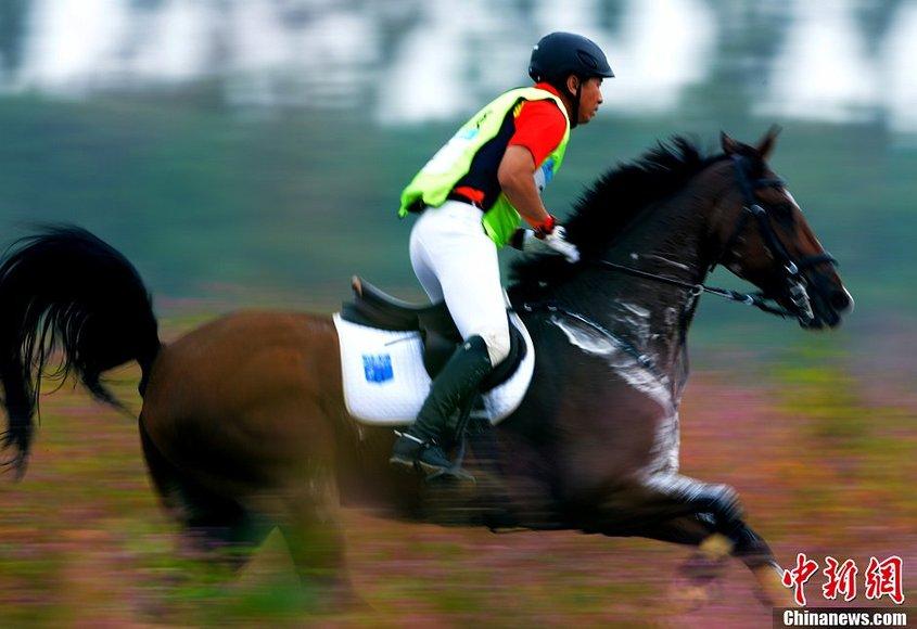 全运会马术团体三项赛 内蒙古骑手张睿越野障碍赛坠马