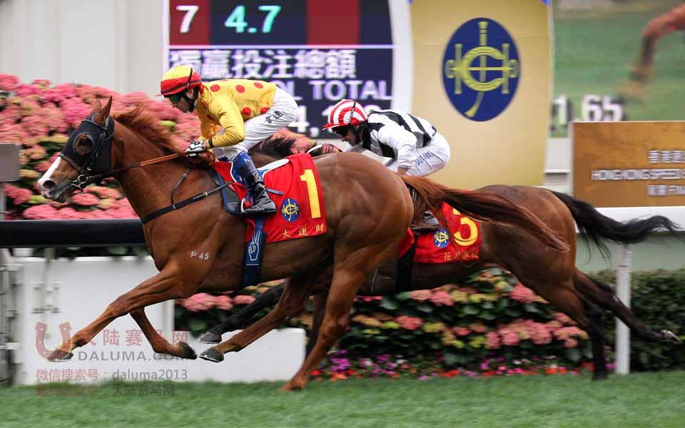 香港赛马一级赛女皇银禧纪念杯现场盛况