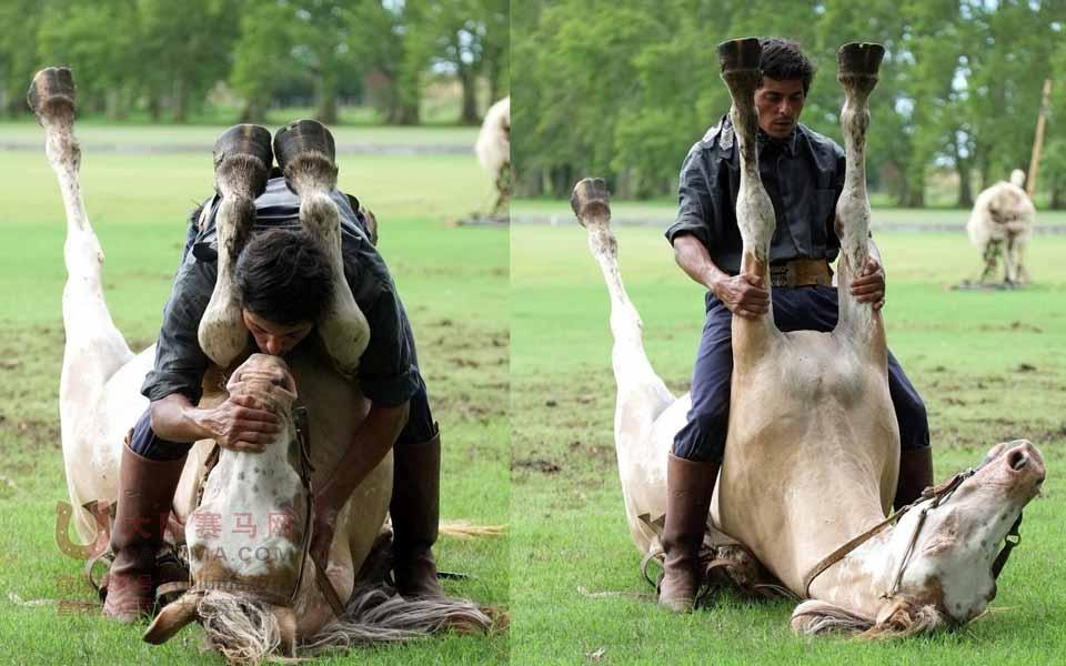 """世界上最牛的驯马师:阿根廷""""马语者""""的催眠马术"""