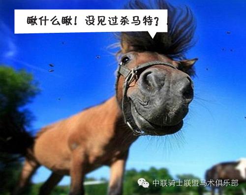 囧马的十个搞笑瞬间,当时我就笑喷了!