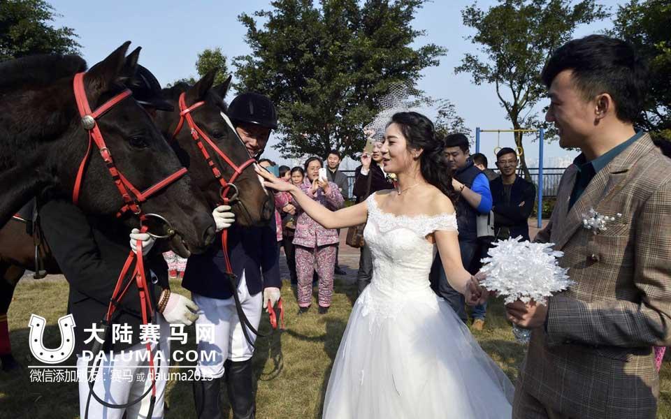 重庆新郎用8匹大黑马迎新娘 引居民穿睡衣围观拍照