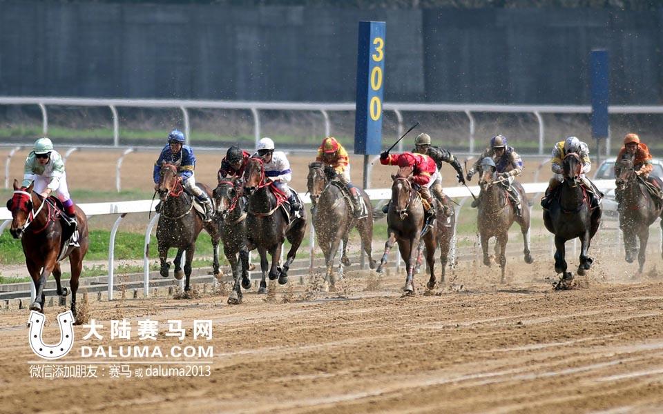 2015武汉速度赛马春季开锣赛在东方马城鸣锣开闸