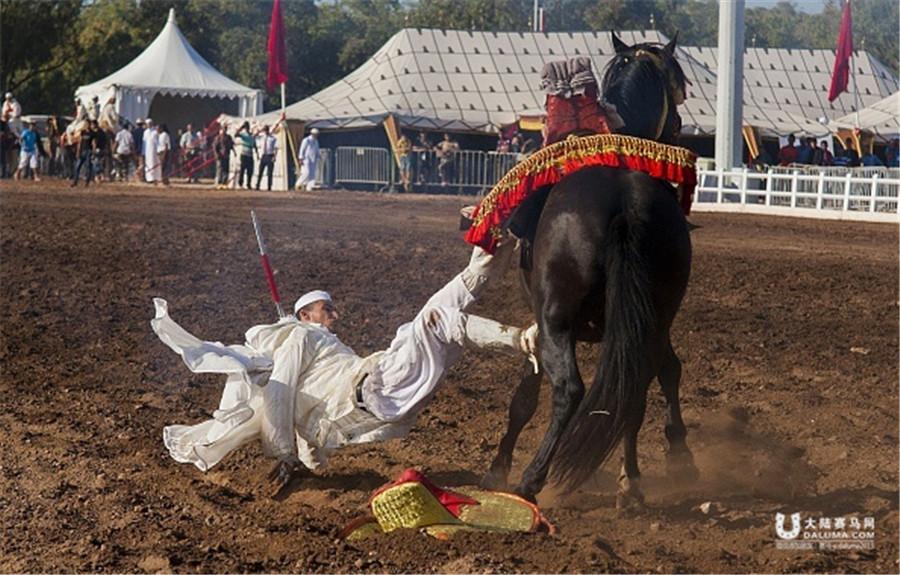摩洛哥马术表演庆抗西战争胜利