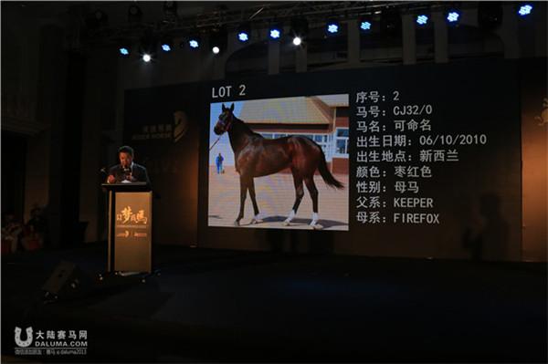国内首个马匹认购会震撼举行(组图)