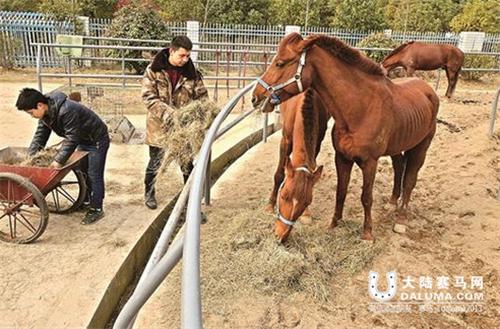 今年春节也选择留下,陪伴这些可爱的马儿欢喜过大年.